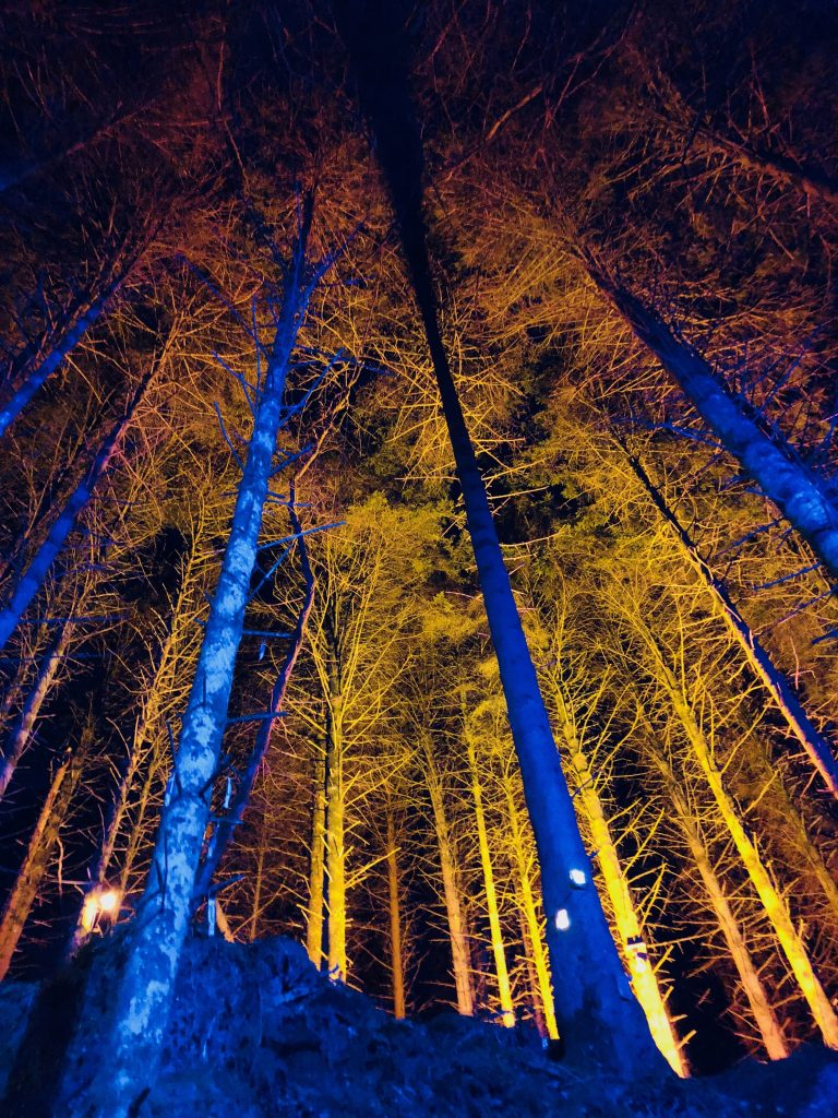 Trees lit up at the Winter Lights Festival at Bluestone