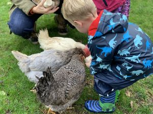 Tredethick chicken feeding