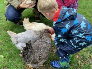 Tredethick chicken feeding