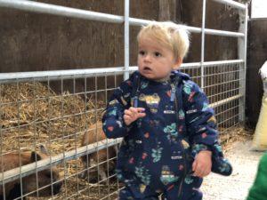 Twins animal feeding at Tredethick