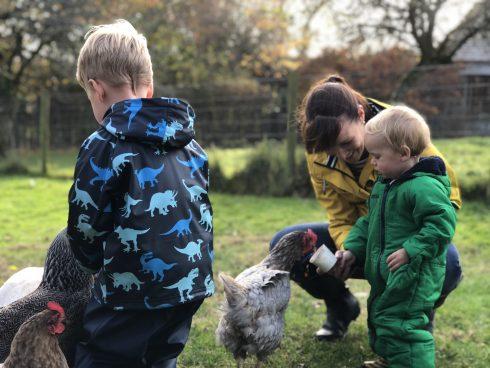 animal feeding at Tredethick