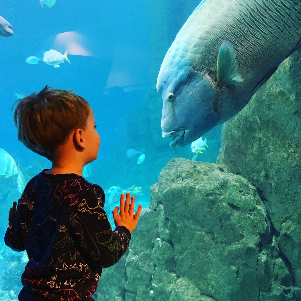 Half term activities at the National Marine Aquarium