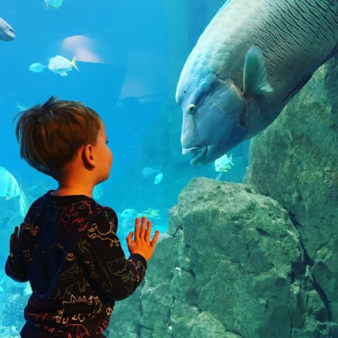Half term activities at the National Marine Aquarium