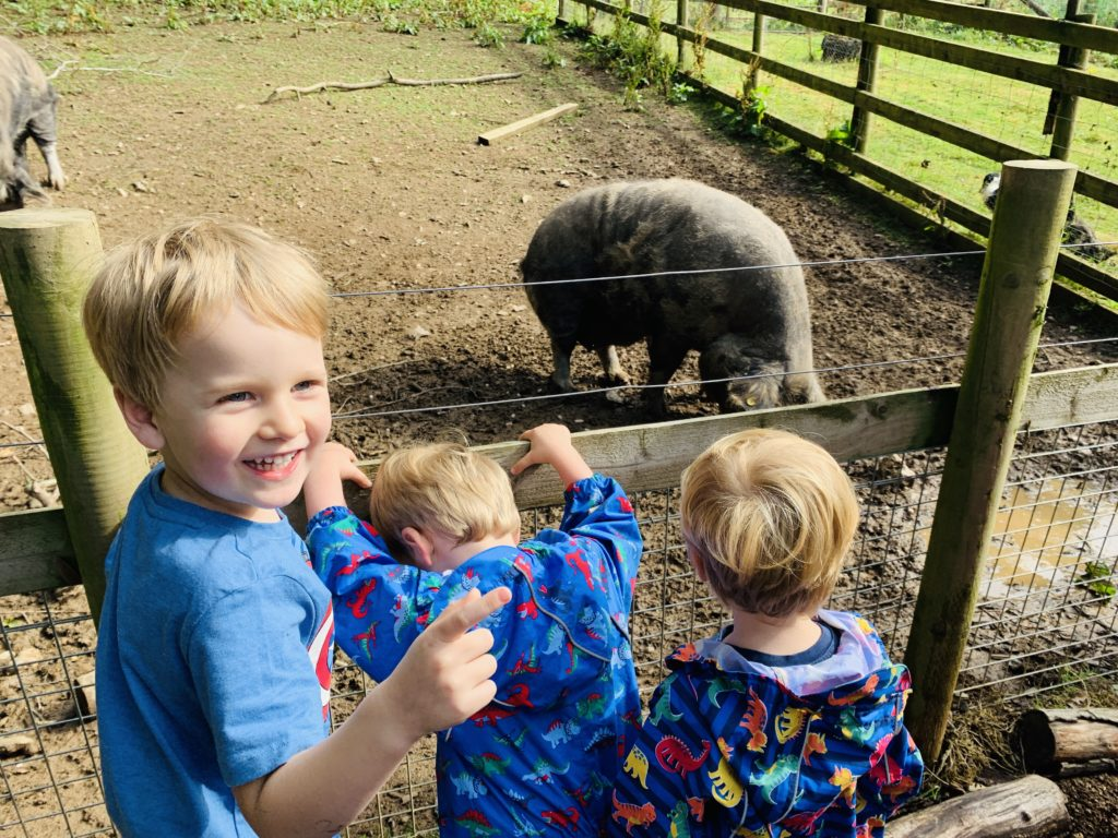 Brothers feeding the pigs at Glynn Barton