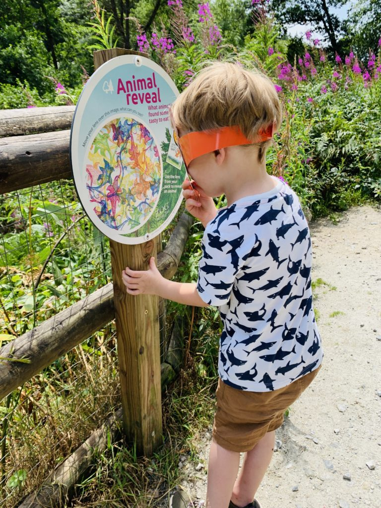 Child doing the zog trail at Cardinham woods during the summer holidays