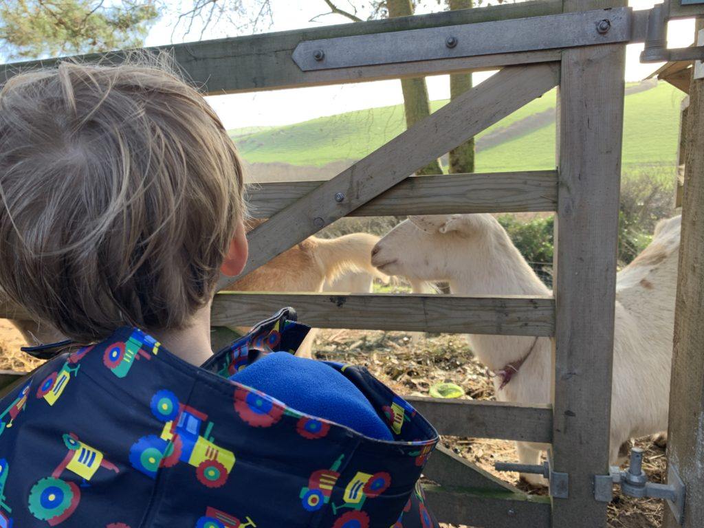 Toddler saying hello to a goat through a gate