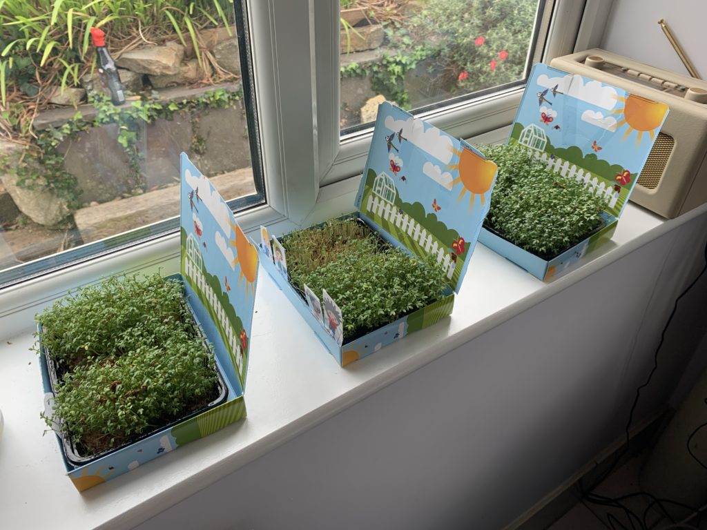 Mini cress gardens sent to grandsons during lockdown by Granny