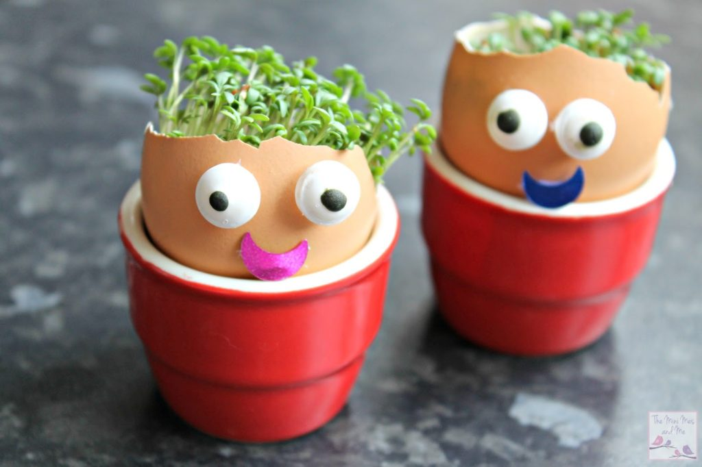 Cress heads made out of egg shells to keep toddlers entertained at home