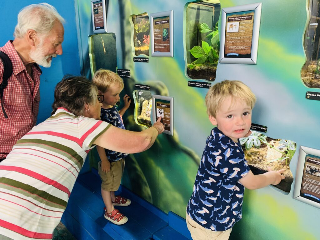 Grandparents and toddler twin boys look at bugs in the bug house at Camel Creek