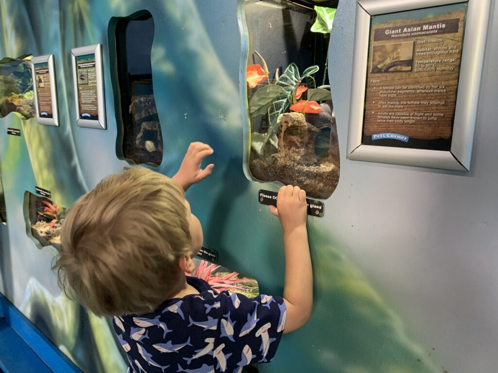 Three year old boy looks into bug tank at Camel Creek