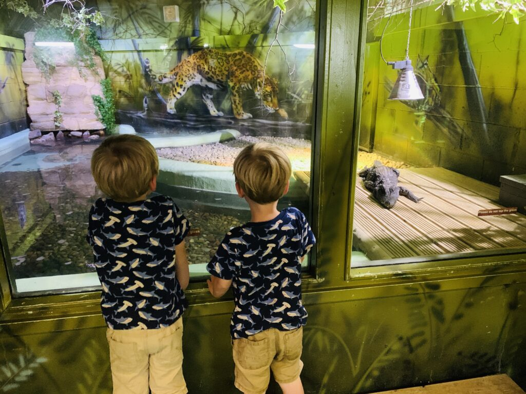 Twin three year olds look at a baby crocodile at Camel Creek