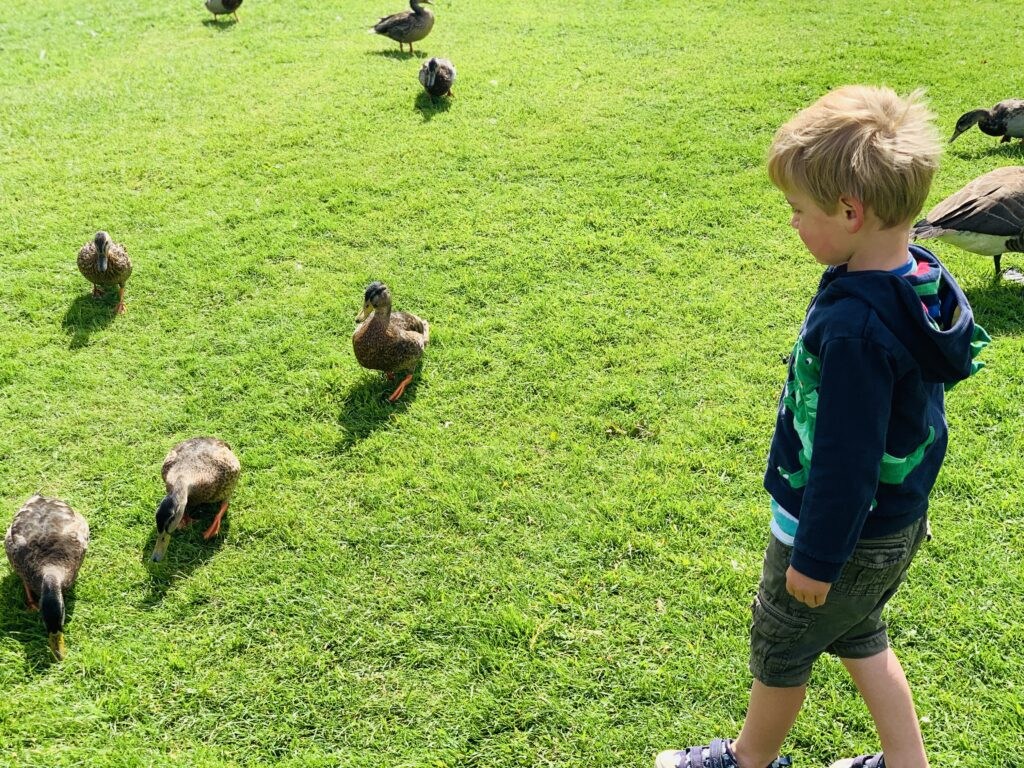 Toddler feeding the ducks at Springfield fun park