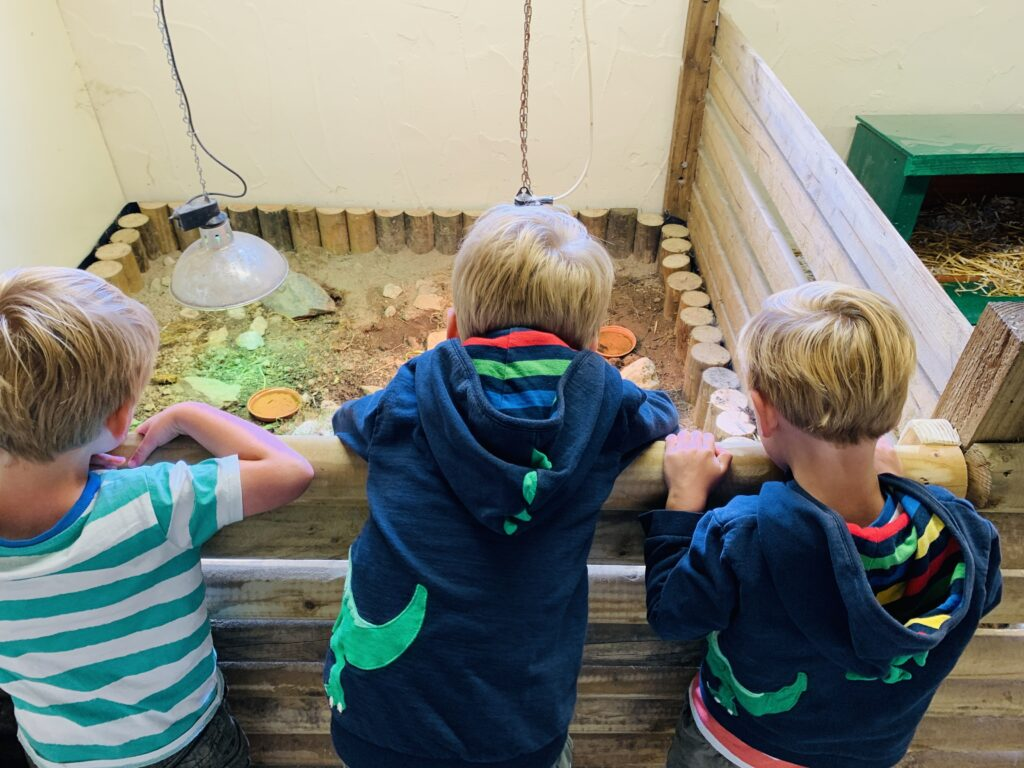 Three brothers lean over a wall into an enclosure to look at baby tortoises