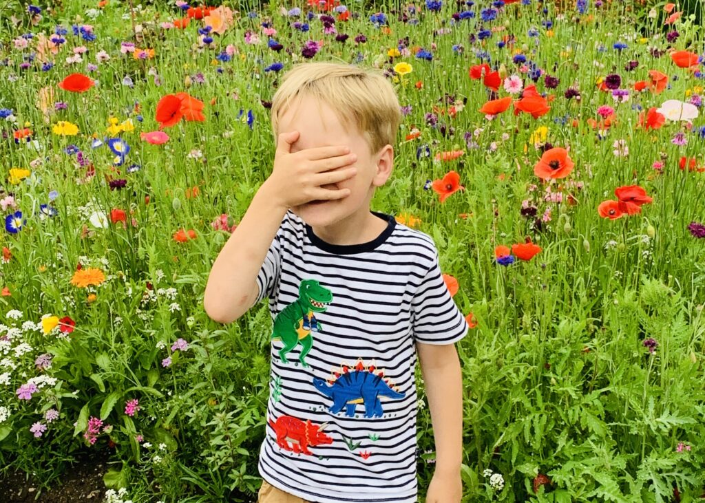 Five year old in wild flowers