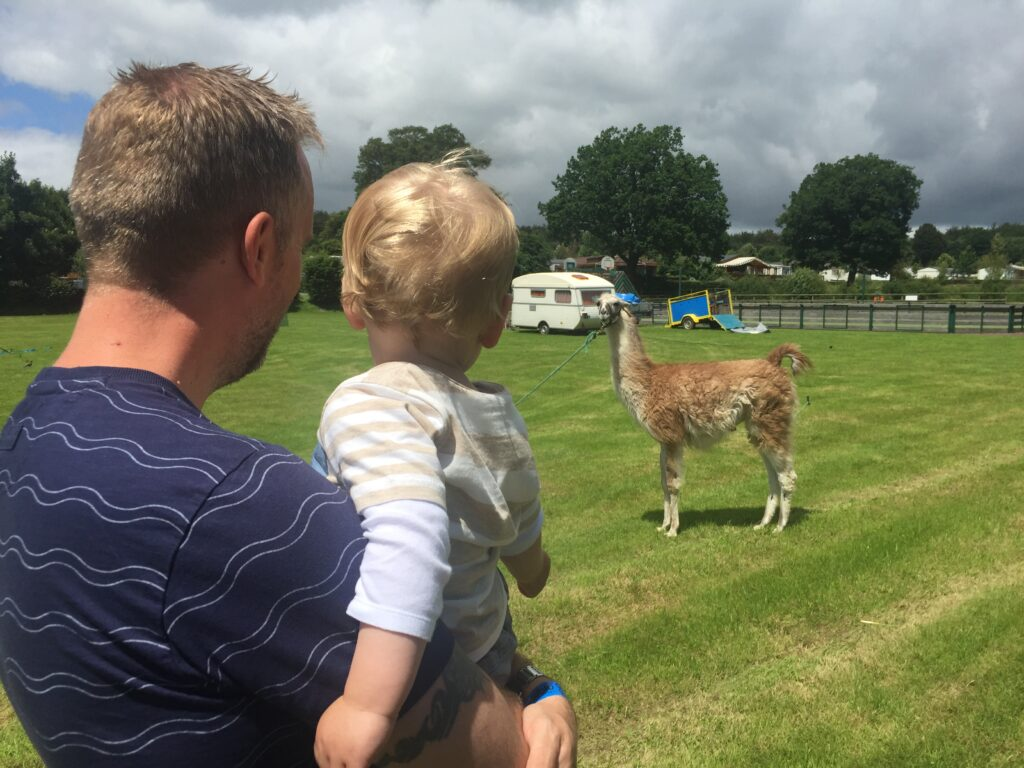 Father holding a blonde toddler boy looking out at an alpaca in a field with a caravan in the background in France