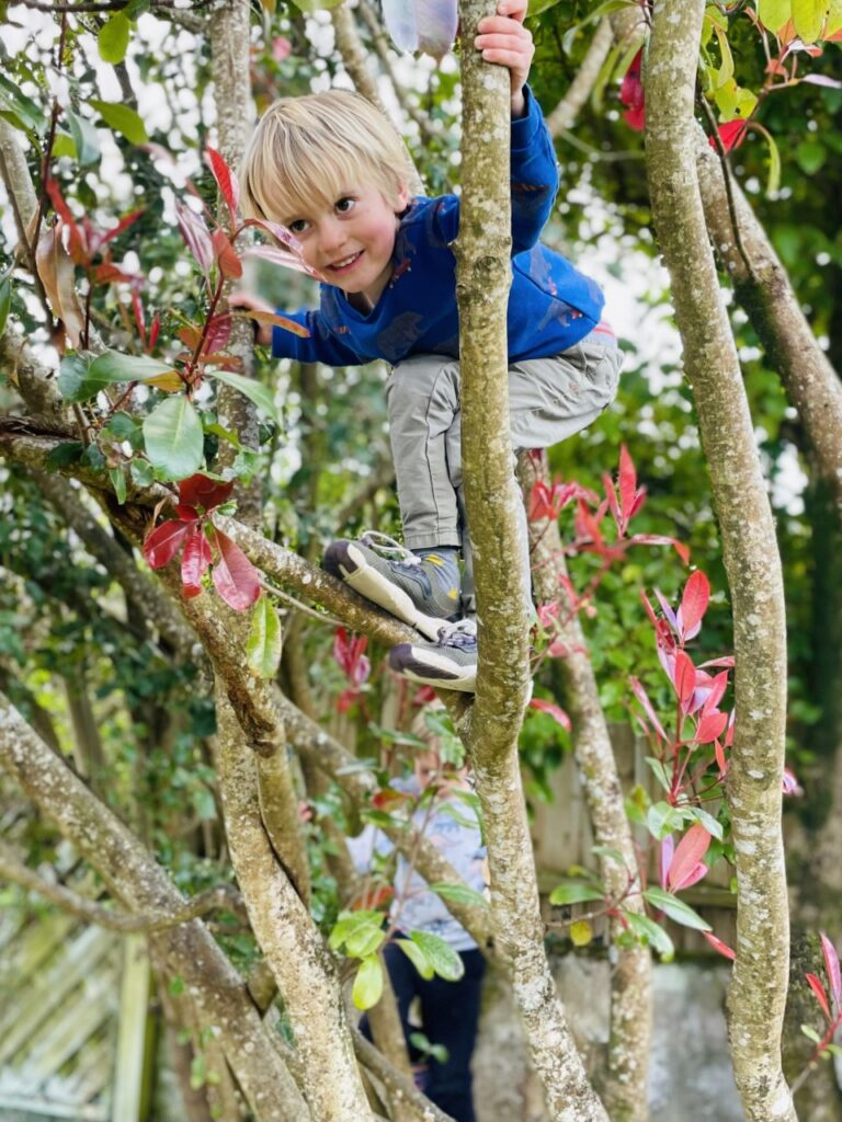 Three year old blond boy climbs high up in a tree