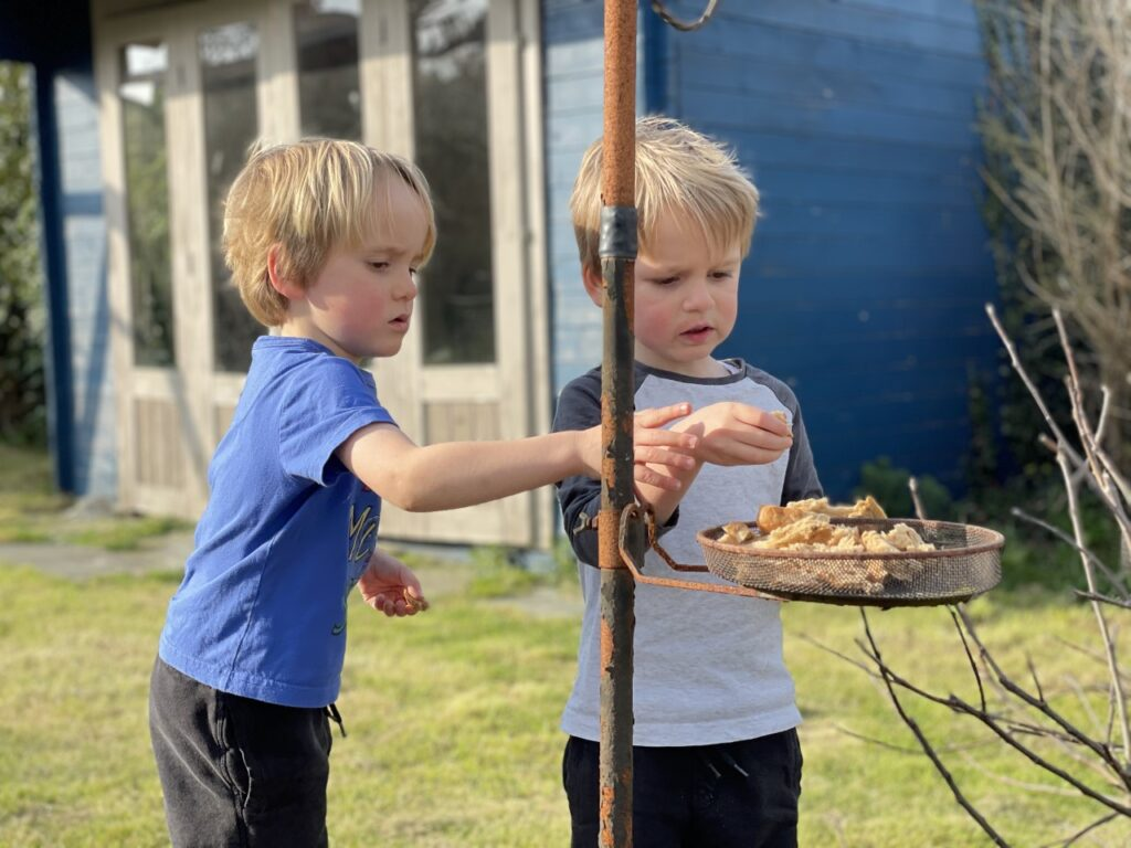 Twin three year old boys put bread on a bird table in the garden