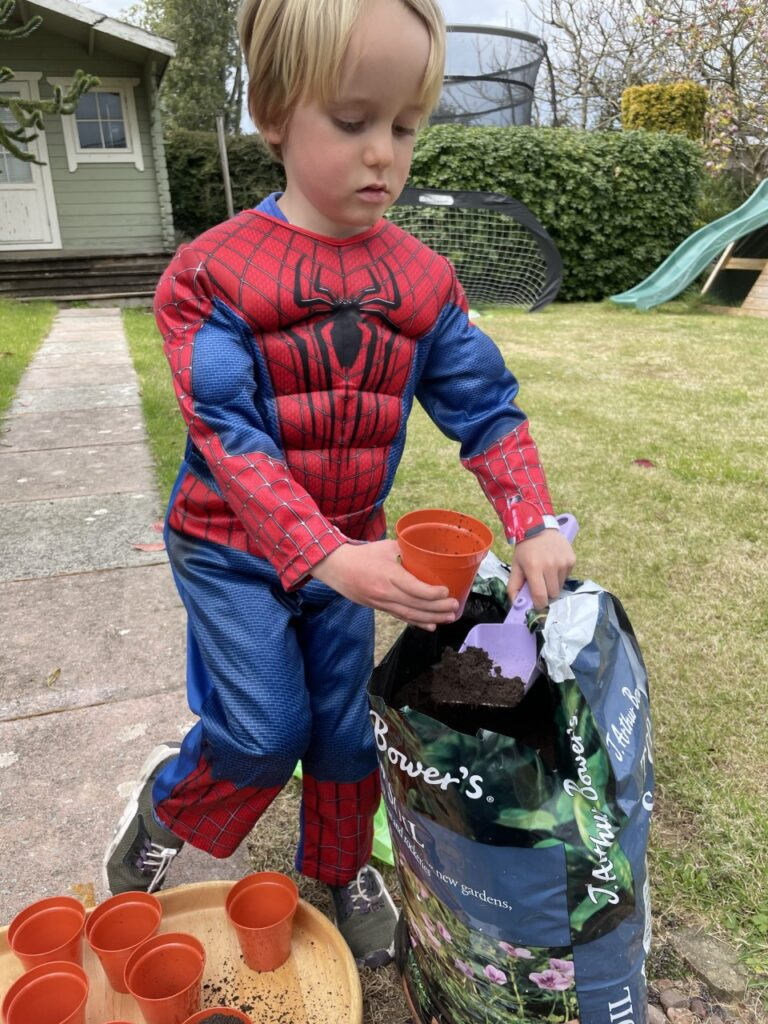 A three year old boy dressed as spiderman helps to plant sunflower seeds in the garden