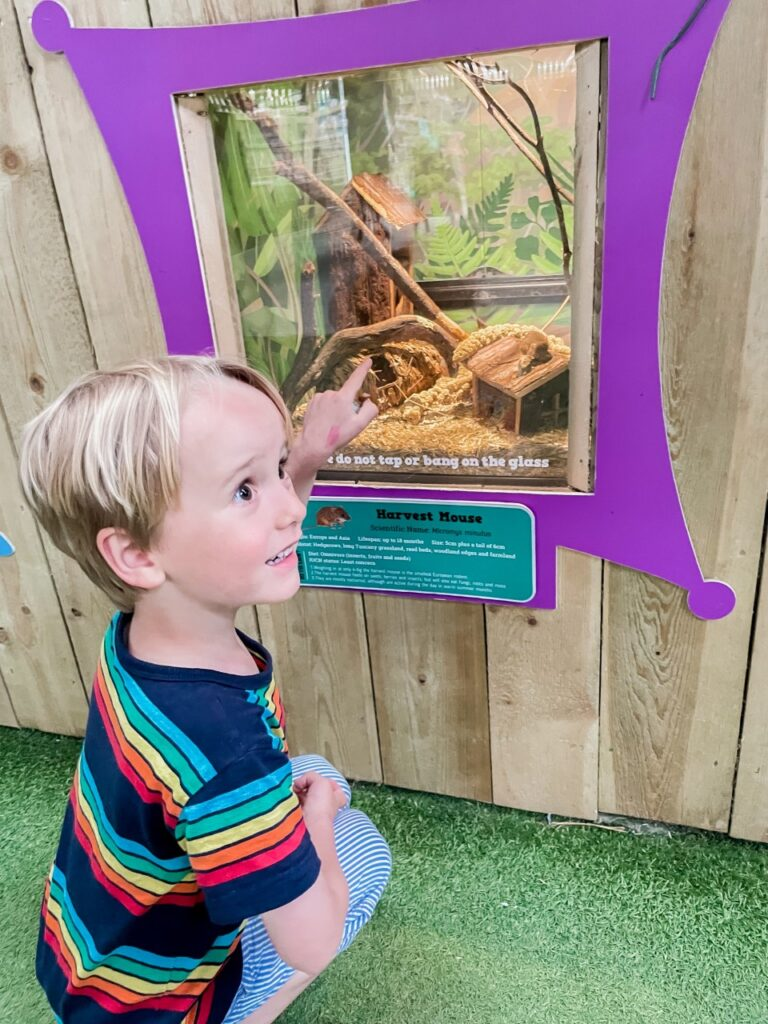 Blonde four year old boy crouches down to look at a mouse in a tank at Tapnell Farm Park