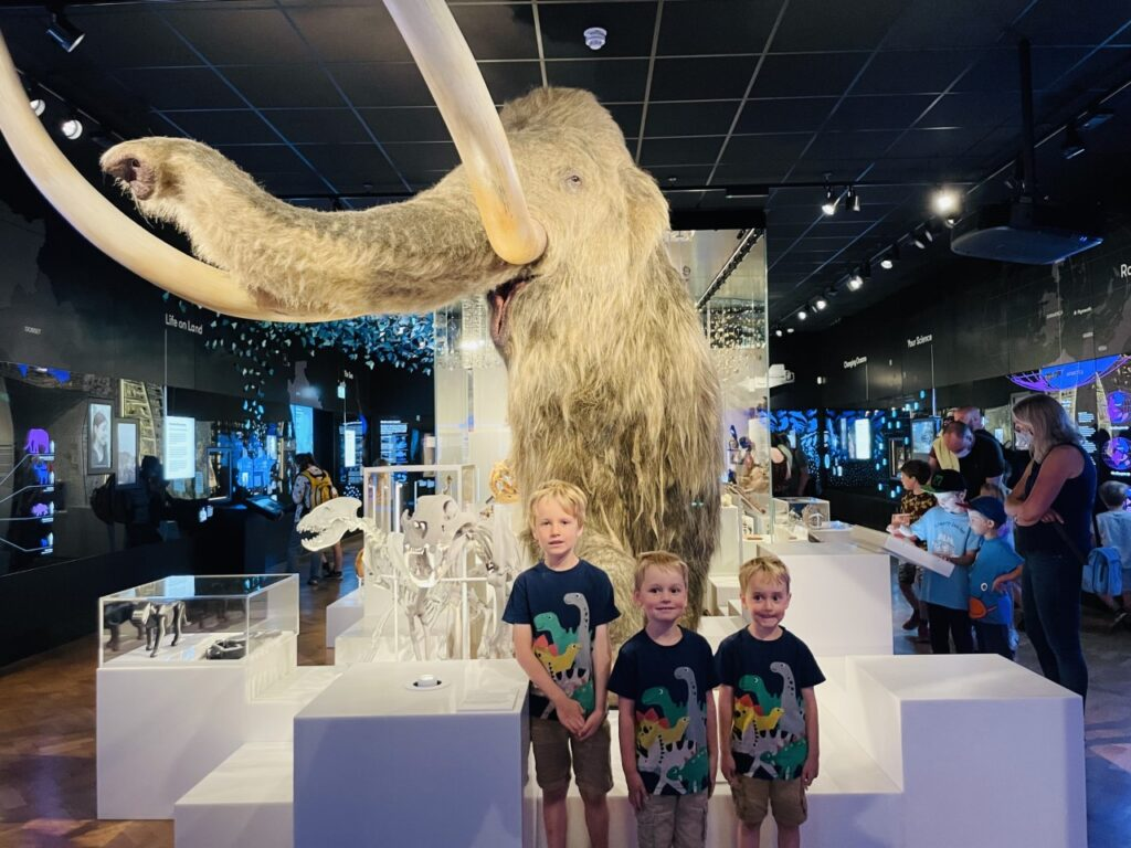 Three boys in front of a woolly mammoth at The Box museum - ideas of things to do indoors in Plymouth with kids